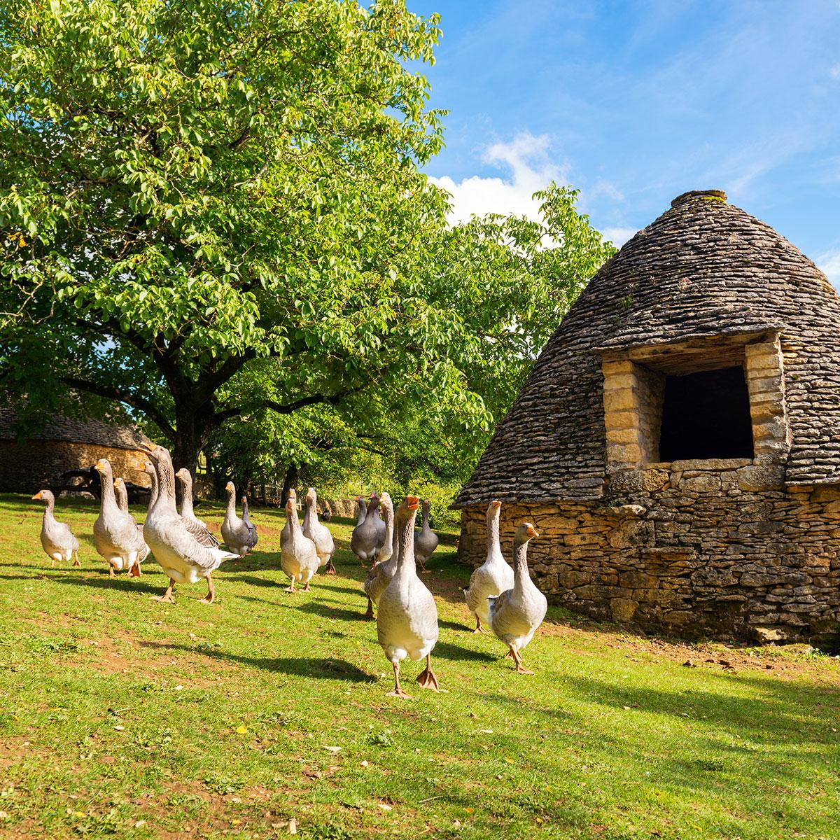 Agroalimentaire & Agriculture en Périgord