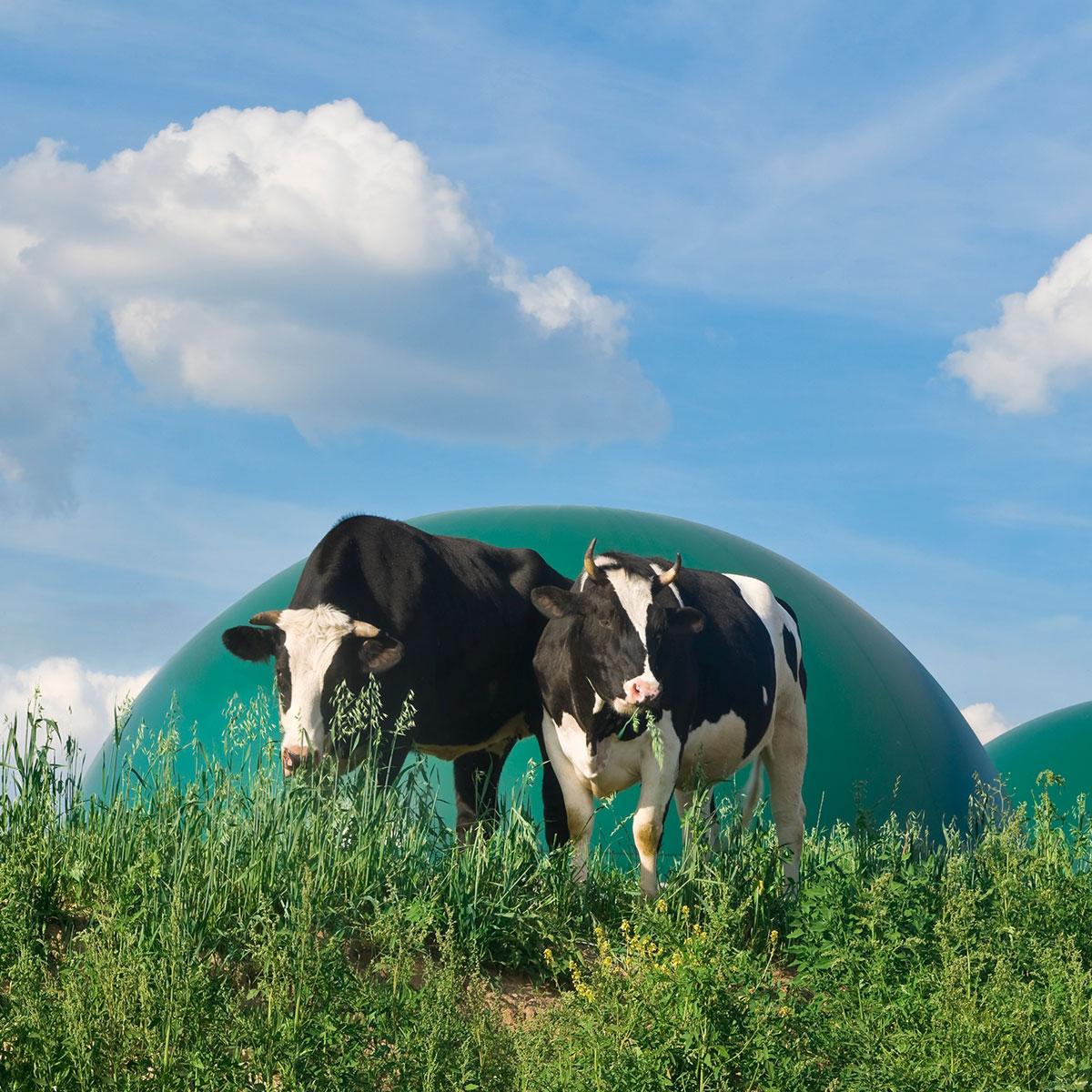 Vert et Éco Responsable en Oérigord